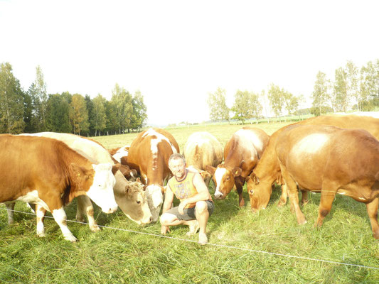 Roland umringt von neugierigen Angus Kühen