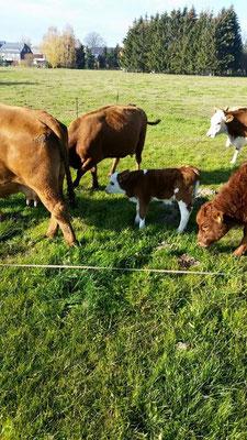 """Unsere Kühe auf der Weide """"Am Bahndamm"""""""