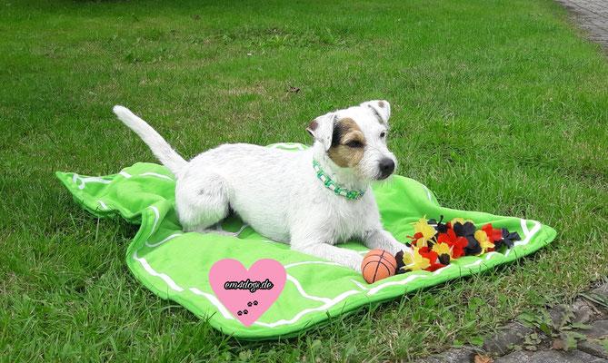 Fussball em4dogs - EM-Hundehalsband / EM Halsband für Hunde