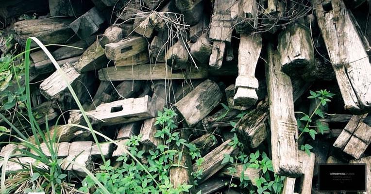 Altholz für nachhaltige Verwertung