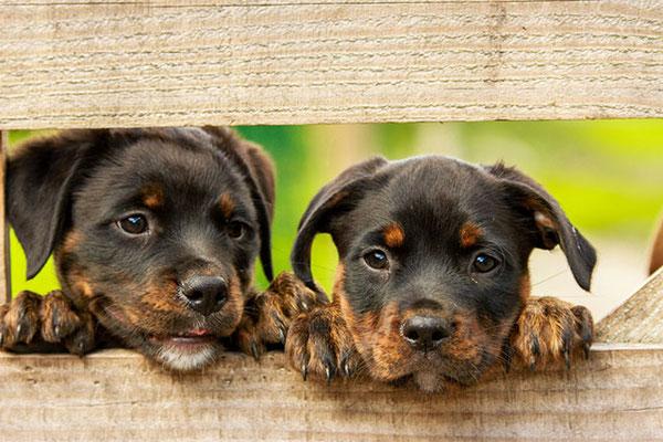 犬同士のコミュニケーション