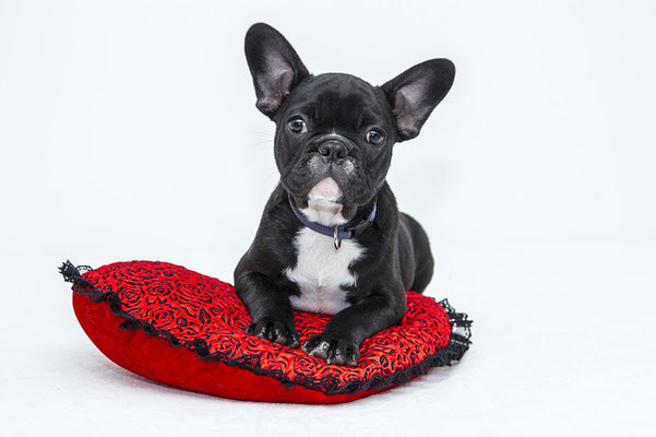 子犬が夜鳴きをする理由と対処法
