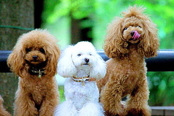 犬社会のルールやマナーを守れる人