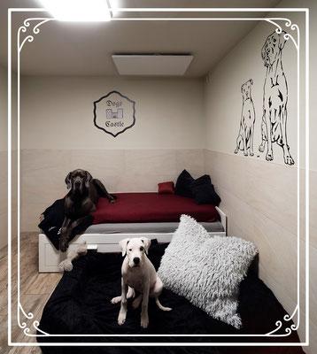 Hundetagesstätte Leibstadt Aargau Dogs Castle Hundesitter
