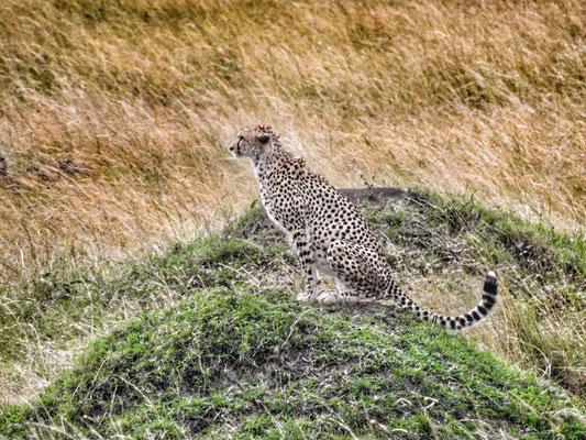 Masai Mara Kenya 2018