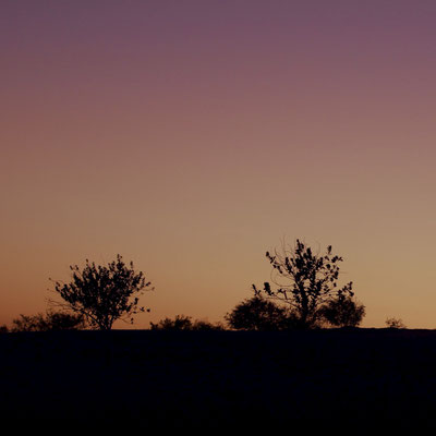 desert sunset vegetation