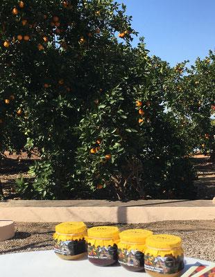 Marmelade Workshop San Eusebio Huerto Orangenplantage