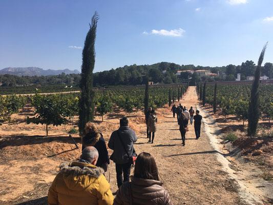 Orangenplantage San Eusebio Famtrip