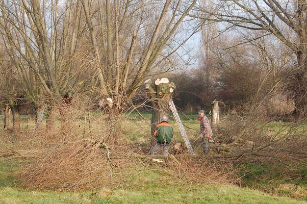 Baumpflege Foto: NABU Trebur