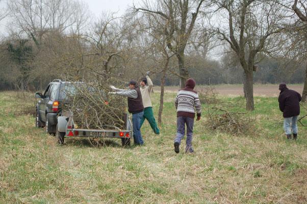 Baumpflege auf einer Streuobstwiese Foto: NABU Trebur