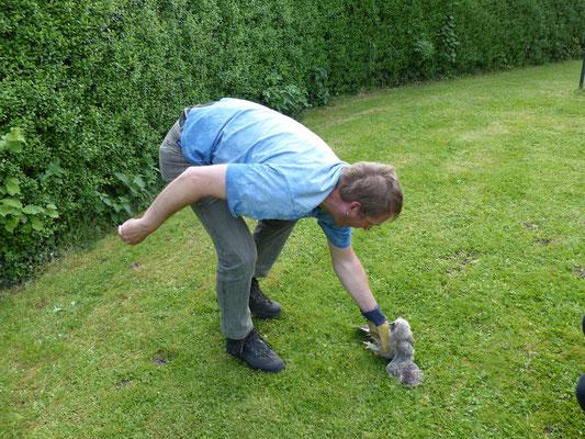 17.05.2015 Junge Waldohreule wird aufgegriffen - Foto: Stefan Wagner