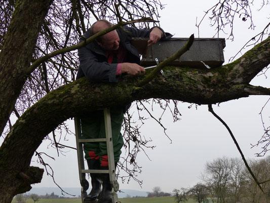 30.12.2015: An einem Baum ca. 200 Meter entfernt wird der Kasten wieder montiert - Foto: S. Wagner