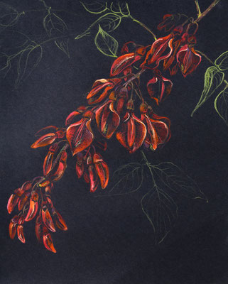 Erythrina cristo-galli, 2018
