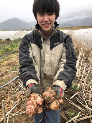 採れたての菊芋です。