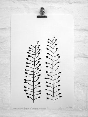 """Botanischer Druck """"Ackertäschel"""", Print auf Büttenpapier von Studio Karamelo"""
