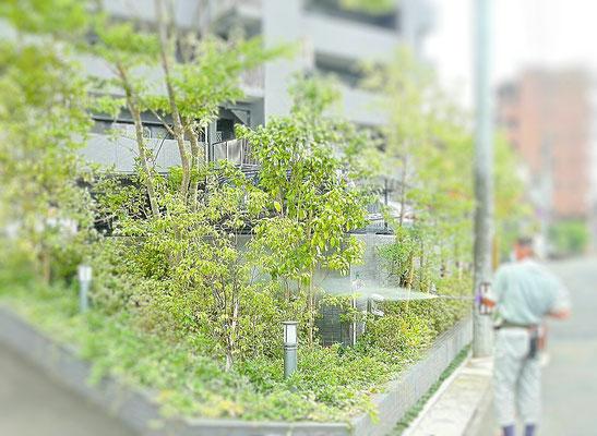 植木の消毒中