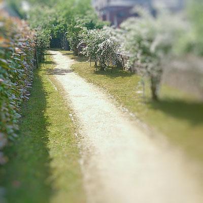 草刈り After