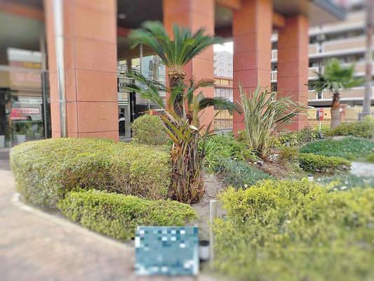 洋風庭園 After