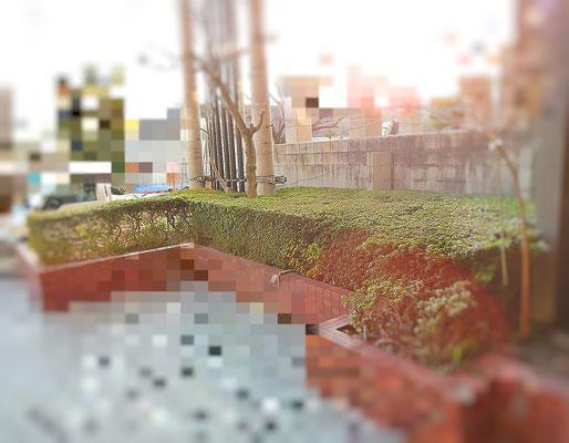庭園リニューアル工事 Before