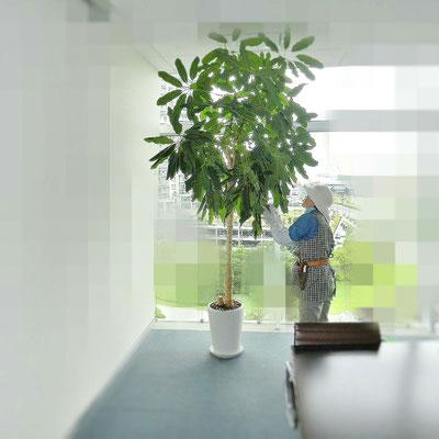 観葉植物の管理