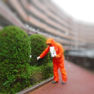 植木の害虫予防消毒