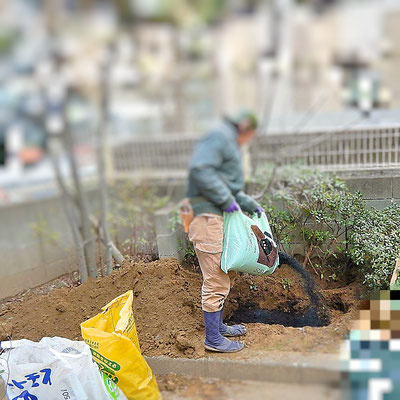 移植工事 土壌改良剤スキ込み中