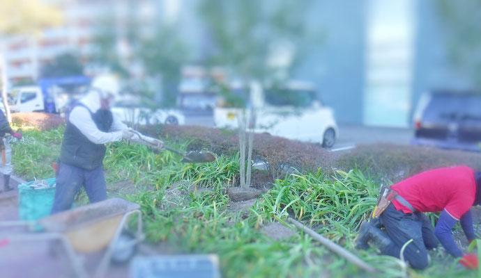 土壌改良剤すき込み