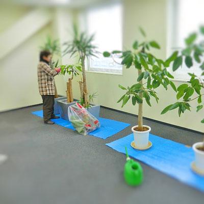 観葉植物管理中