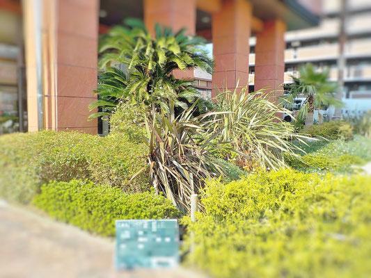 洋風庭園 Before
