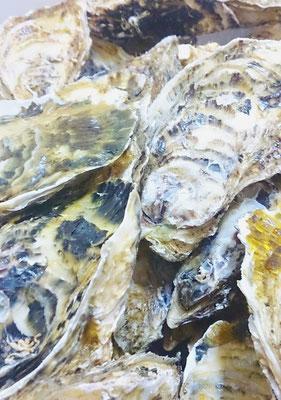 唐津産 牡蠣