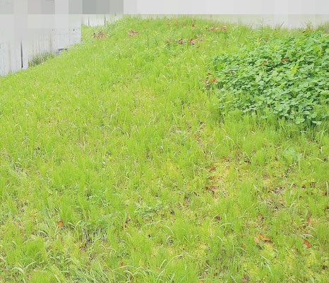 草刈り Before