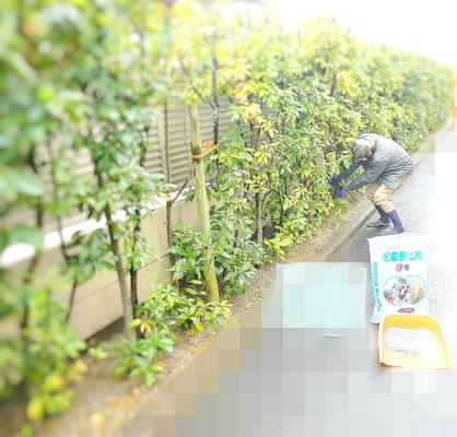 寒肥(カンピ)