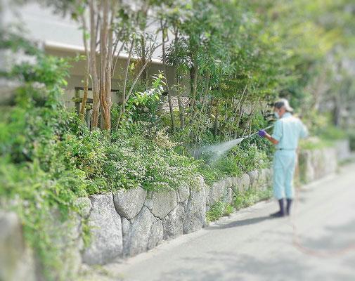 植木の消毒散布中