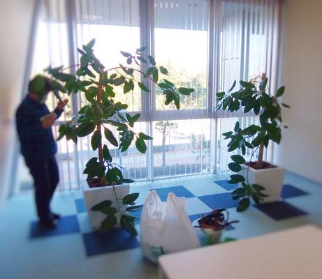 観葉植物管理