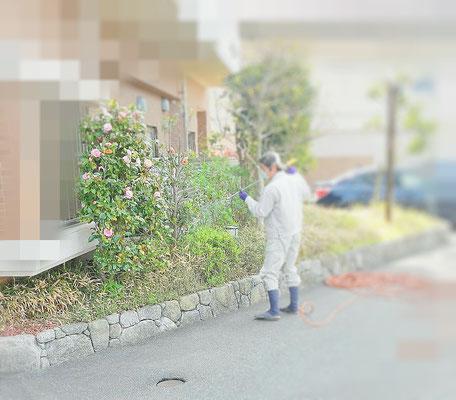 植木の消毒 散布中