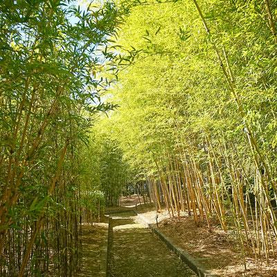 福岡緑化センター 竹林