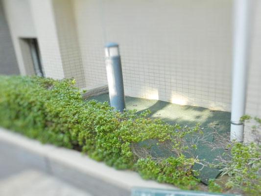 防草シート敷