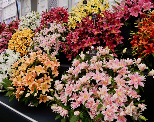 Chelsea Flower Show Lilien