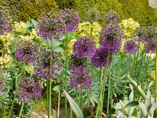 Gartenreise England : Wisley Garden