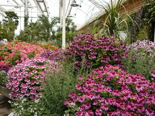 Gartenreise England: Wisley GardenRHS