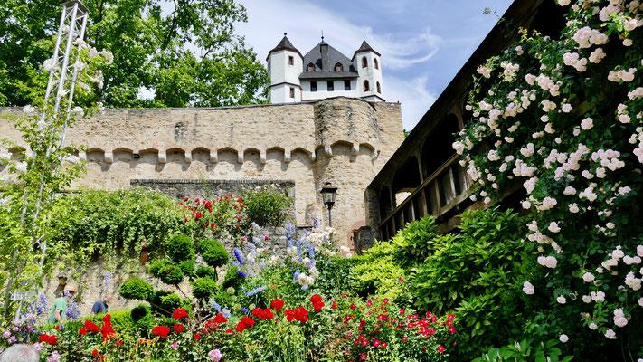 Eltville im Rheingau, Rosarium im Burggarten Eltville im Rheingau , Wein,Sekt und Rosenstadt