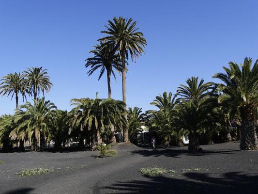 Garten Cesar Manrique  Lanzarote