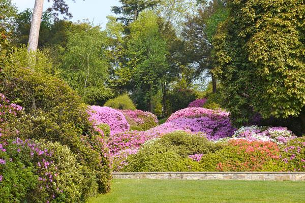 Italien Comersee Villa Carlotta Park Rhododendron Azaleen