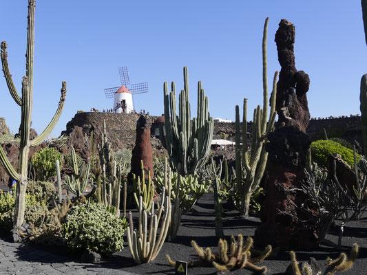 Kaktusgarten auf Lanzarote