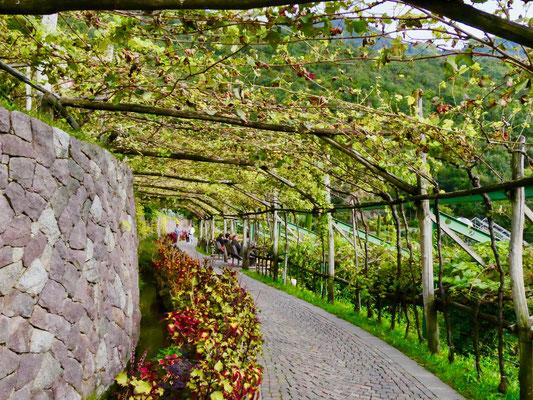 Terrassengärten Schloss Trautmannsdorf Meran