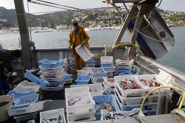 Puerto Soller Mallorca Fischerboote
