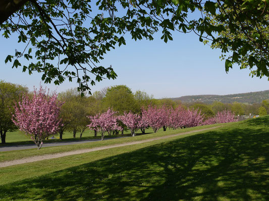 Bonner Rheinauen Park