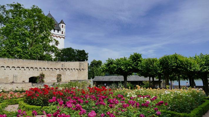 Burg Eltville  am Rhein, Wein,Sekt und Rosenstadt