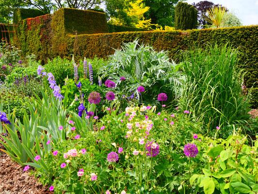 Eibenhecken und Longborders, die typisch englischen Blumenbeete Hole Park Gardens