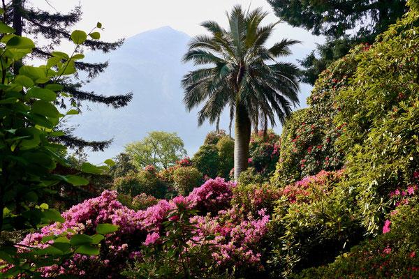 Comersee, Park Villa Carlotta Italien Comersee Villa Carlotta Park Rhododendron Azaleen